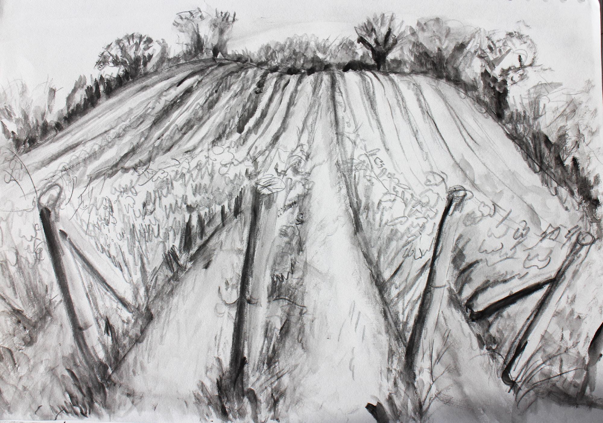 Old Walls Vineyard