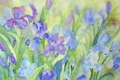 Irises at Giverny
